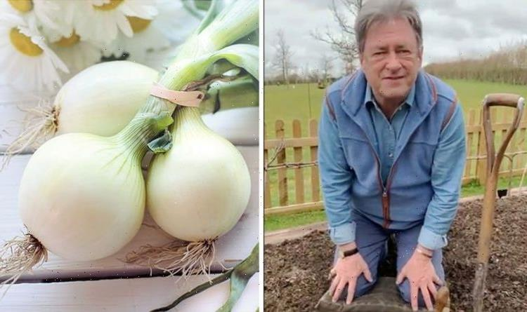 Alan Titchmarsh shares trick for growing 'healthy beautiful' onions