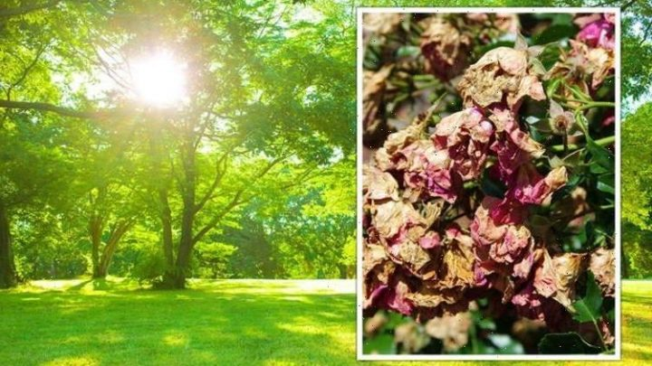 How to stop plants from burning in the summer sun