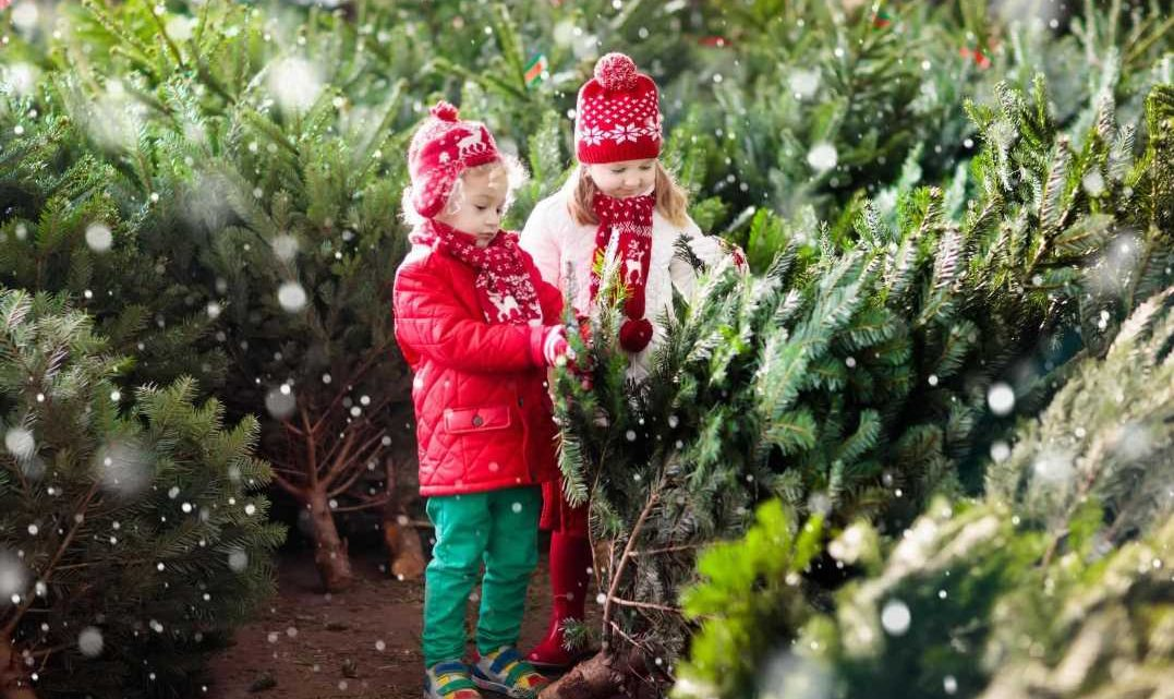 Parkdean launches Christmas and New Year breaks from £279 – including to Cornwall, Lake District & Kent