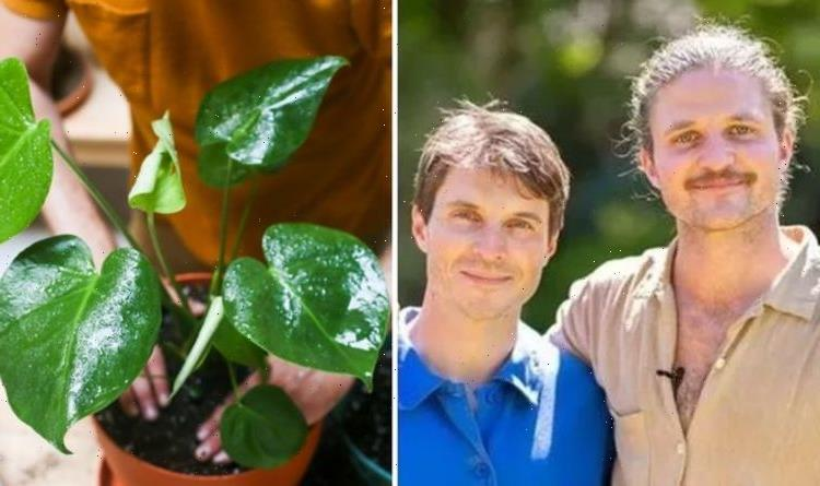 'There are bomb-proof ones!' The Rich brothers on simple plants that don't need much care