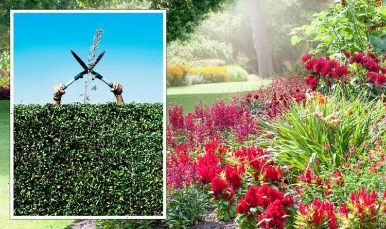 What to cut back, prune and deadhead in August – full guide