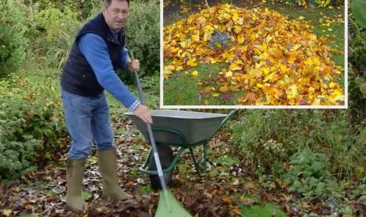 'Plants will perish!' – Alan Titchmarsh warns against prolonging removing autumn leaves