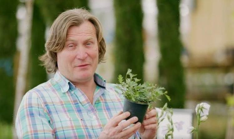 David Domoney shares money-saving tip that makes 'big difference' in spending on plants
