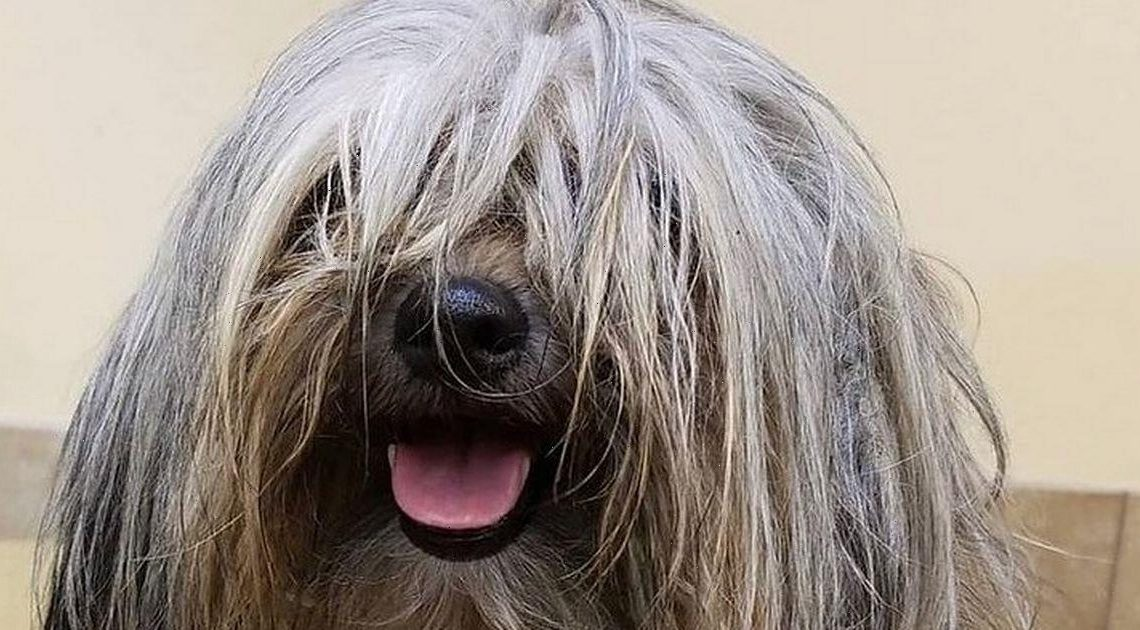 Dog's trim leaves him looking 'cute' as he embarks on major transformation