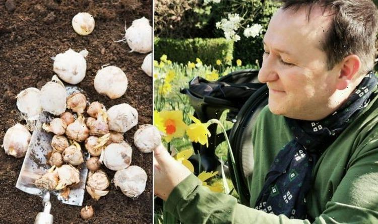 Gardening: When to plant winter bulbs – Mark Lane's genius tip to stop rotting in wet soil