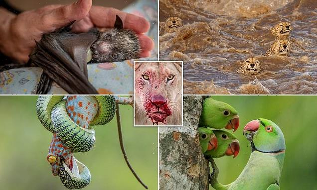 Highly commended images for Wildlife Photographer of the Year 2021