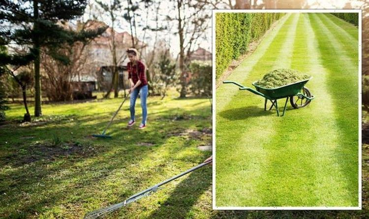 How to scarify your lawn – The KEY techniques to 'breathe life' into your lawn