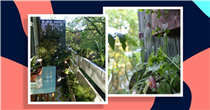 How to transform your balcony into a flourishing green space