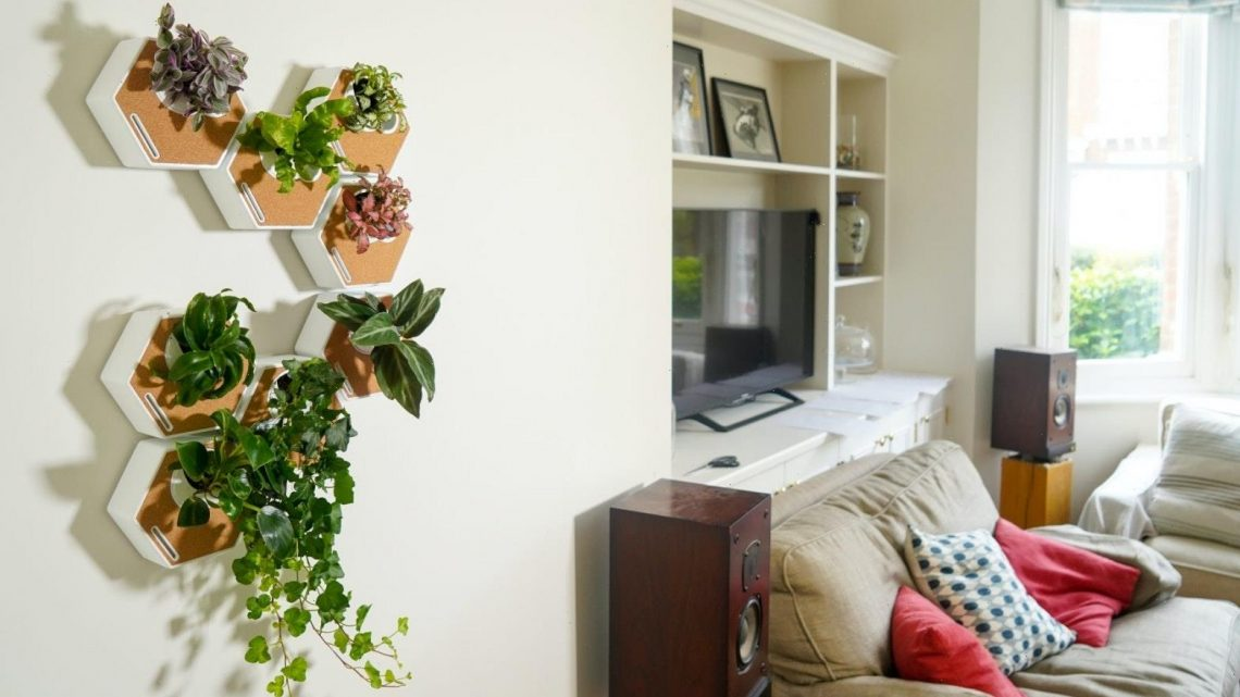 This genius new product makes displaying houseplants really easy