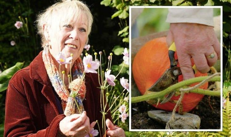 Carol Klein shares how to harvest pumpkins or risk 'rot during the winter'