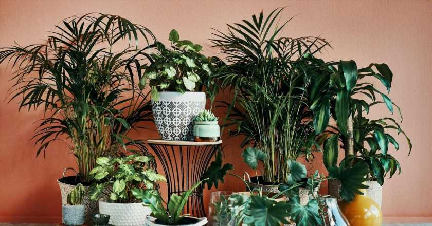 Plant's leaves curling? Here's why your radiator could be to blame